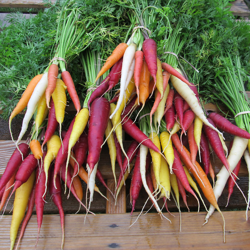 The Hudson Valley Seed Library's renowned Kaleidoscope Carrots.