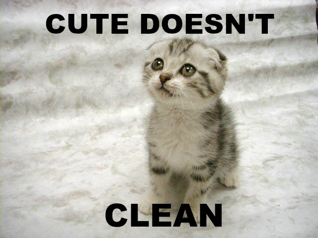 I found that kitty picture here: http://www.buypetmedicine.com/pets/general/cute-kittens-and-cats-pictures/