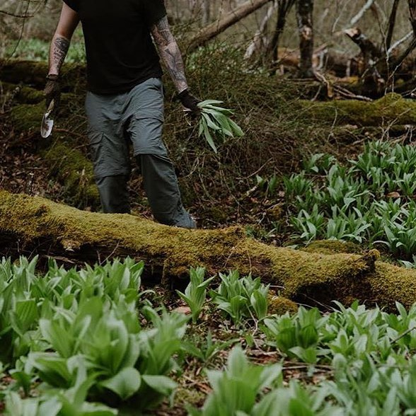 This Saturday, May 4 we're celebrating all things RAMP. Chef JP will be serving his signature loaded hotdogs with a slurry of ramp condiments over at @roscoebeercompany for their annual wild ramp festival (with tasty beers to boot!).l🌱🍺 Stay at one of our inns and join chef @aksel.t for a foraging trip at the DeBruce and pick some of these treasures yourself!