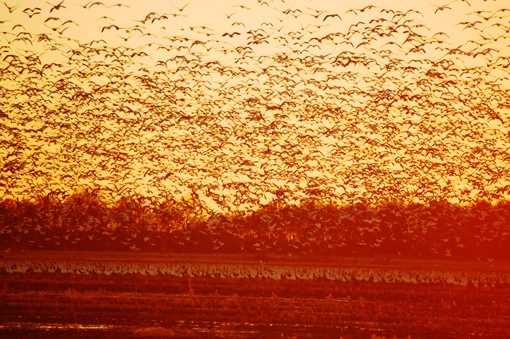 Migration on the Mississippi Delta