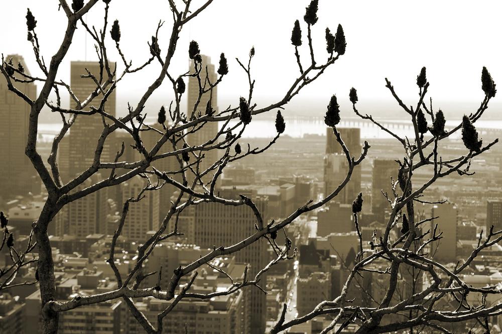 Montreal_Plateau_MOD_CROP.jpg