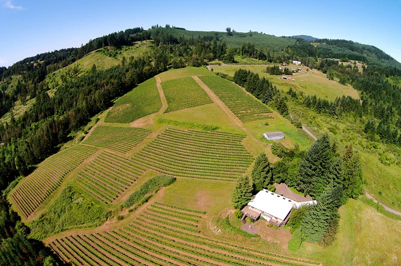 Aerial Photography Fir Crest Vineyard Carlton