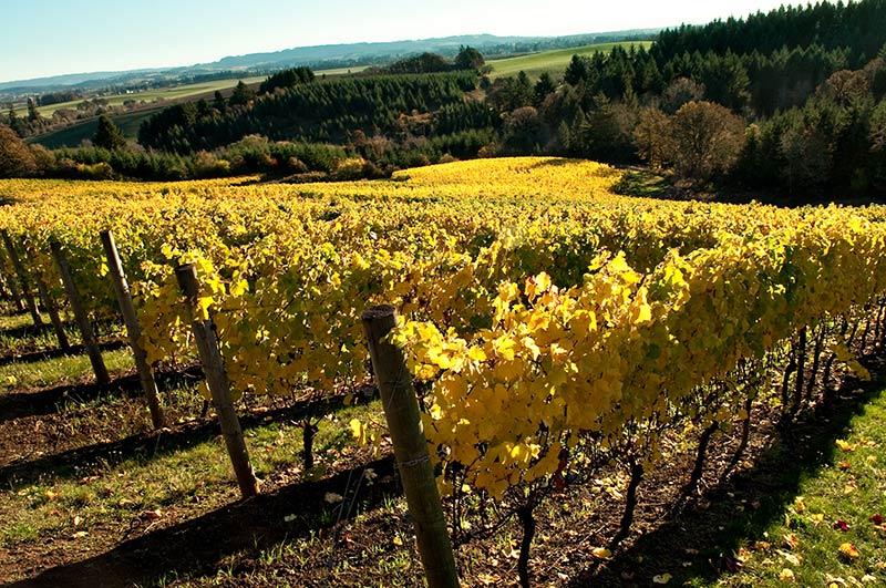 Twelve-Vineyard-1.jpg