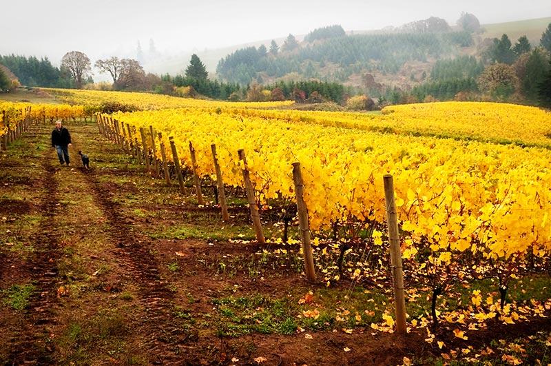 Twelve-Vineyard-2.jpg