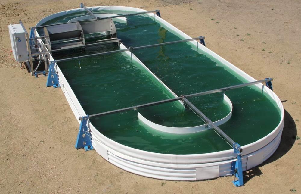 Algae raceway