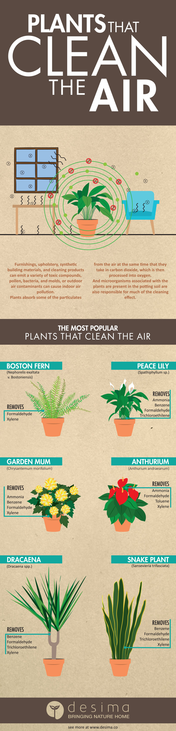 Plants that Clean the Air