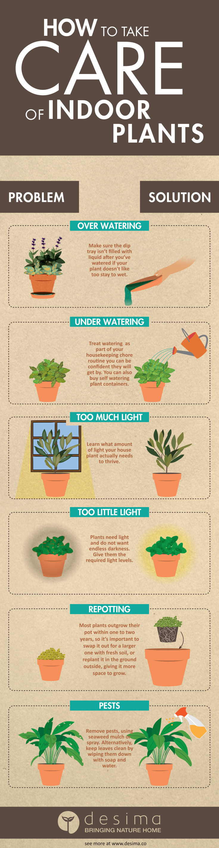 How to take care of indoor plants?