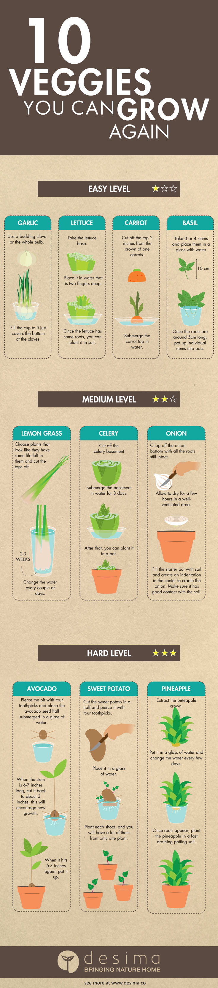 Infographic | Grow Vegetables From Scraps Instead Of Seeds
