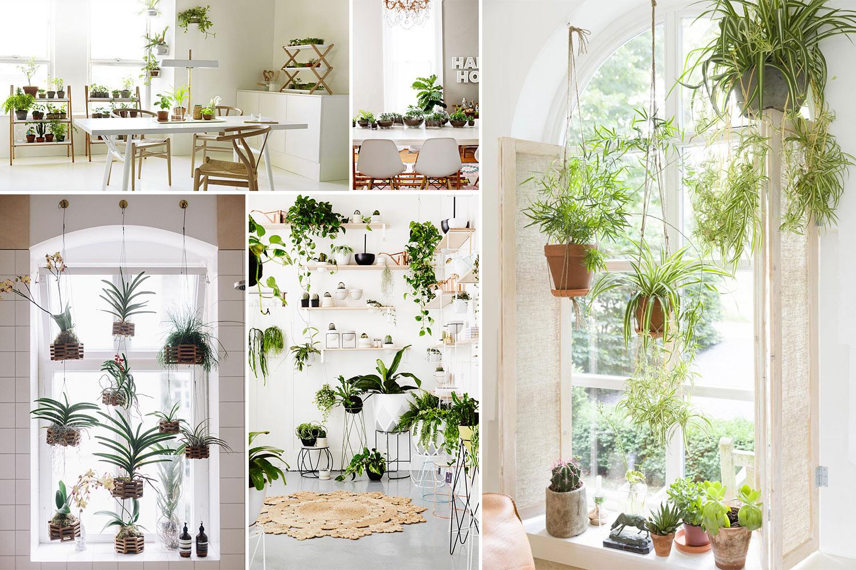 10 Amazing Indoor Garden Ideas To Brighten Your Home