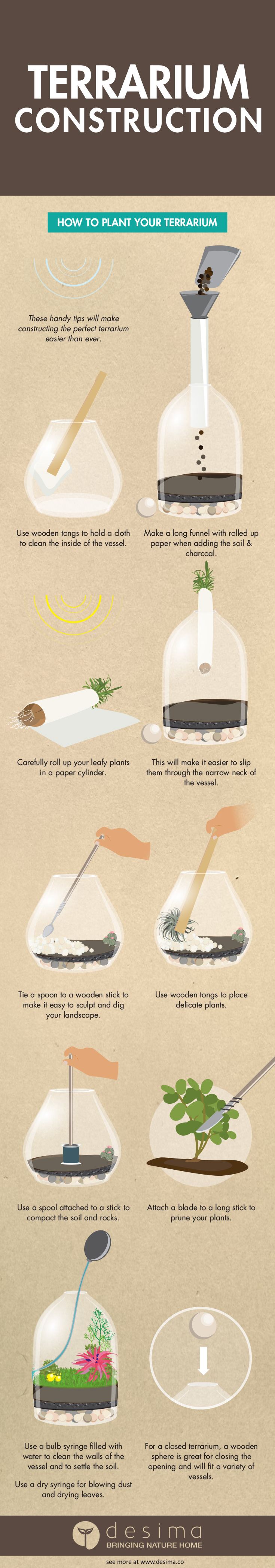 Terrarium Construction Infographic