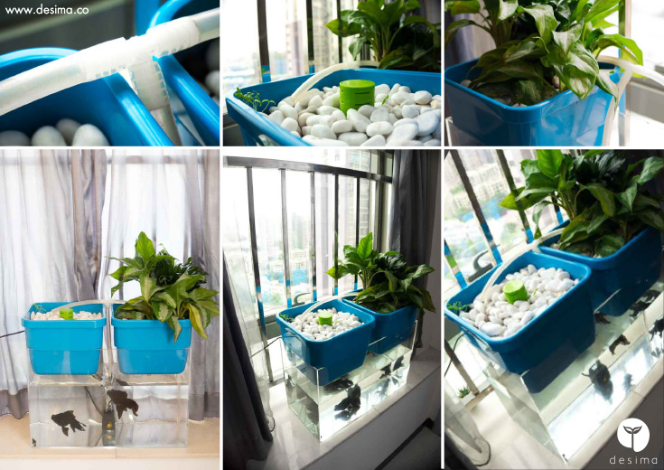 aqua garden. This Is A New Aquaponics Product, Designed To Introduce People Aquaponics. Development Almost Finished And I\u0027ve Testing It For The Last Few Weeks. Aqua Garden Desima