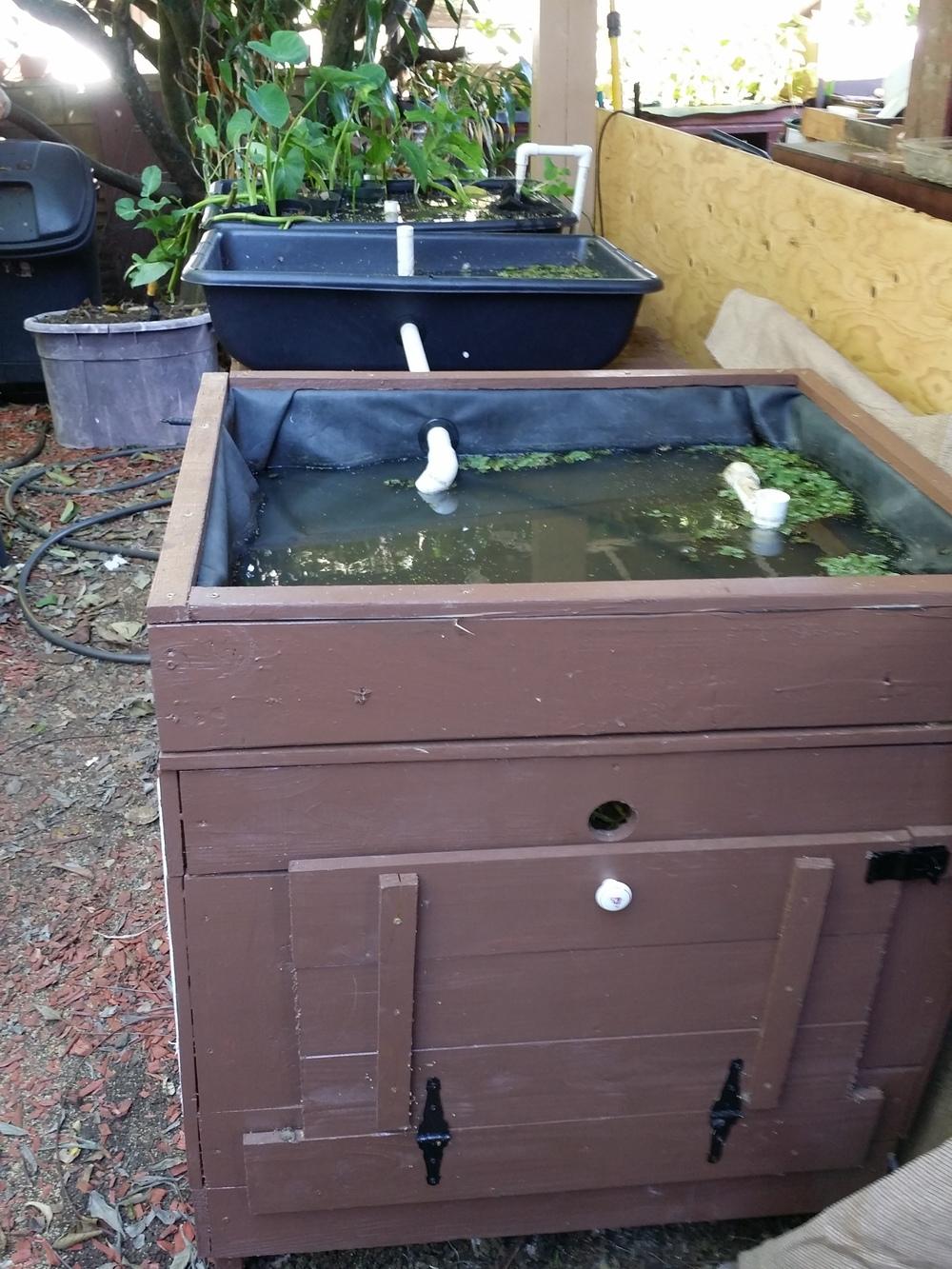 duck aquaponics 002.jpg