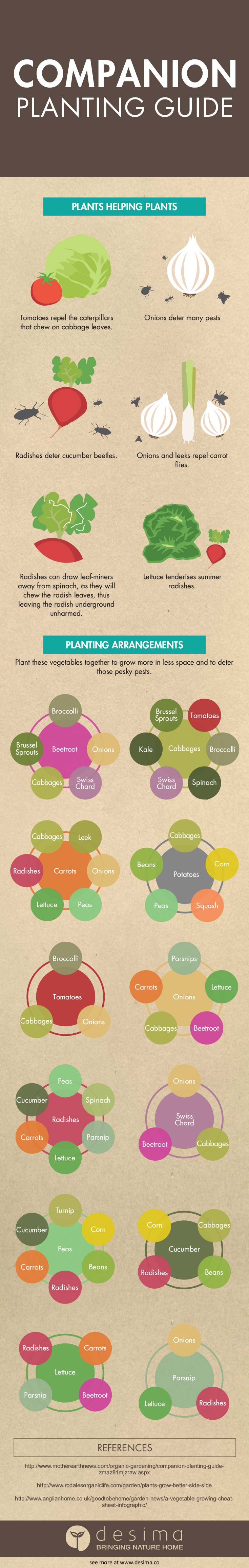 Companion planting guide infographic