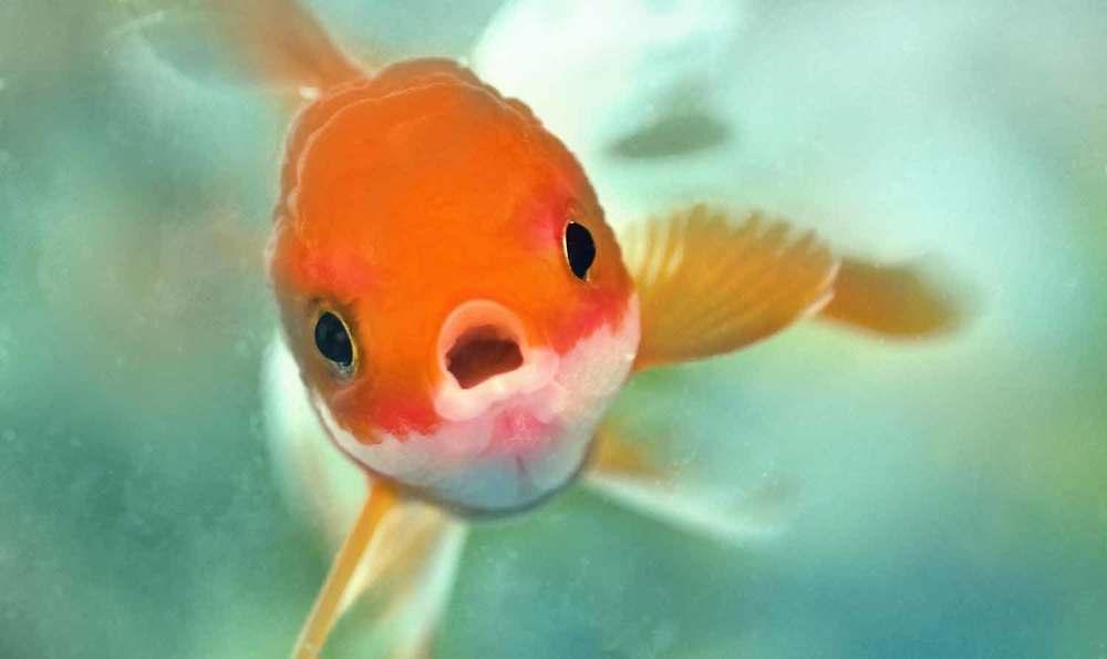poo fish www