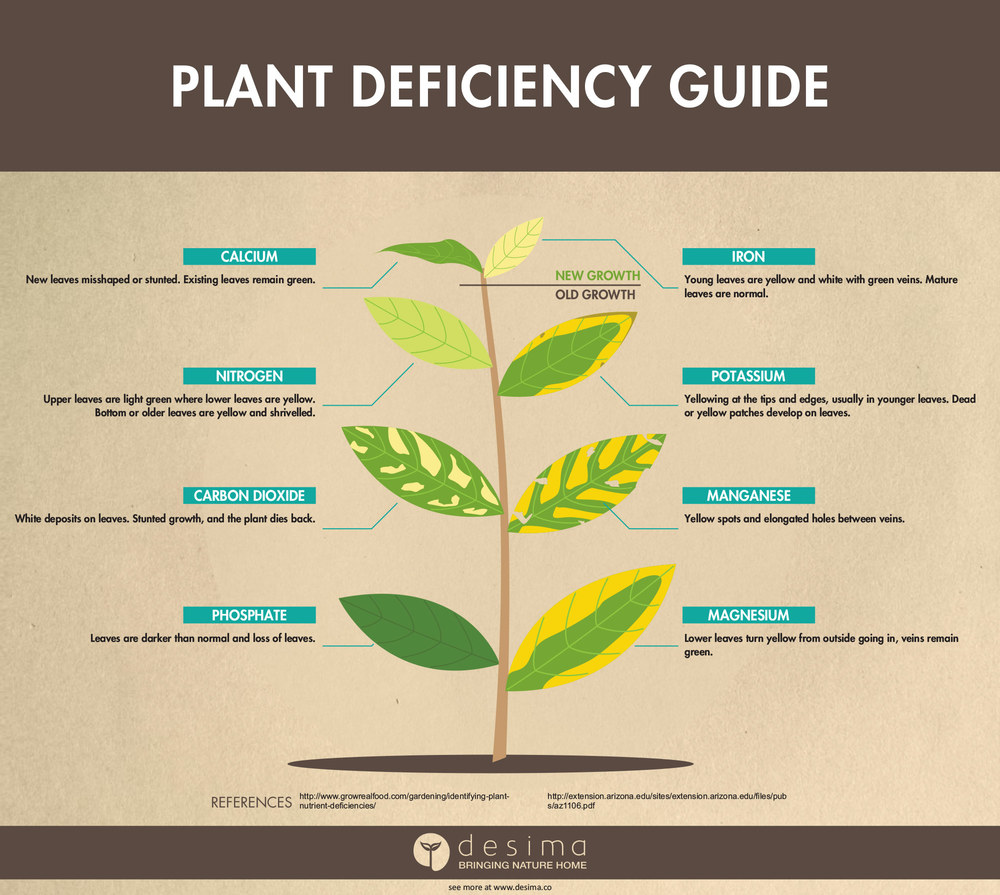 Identifying plant nutrient deficiencies desima for Soil zinc deficiency