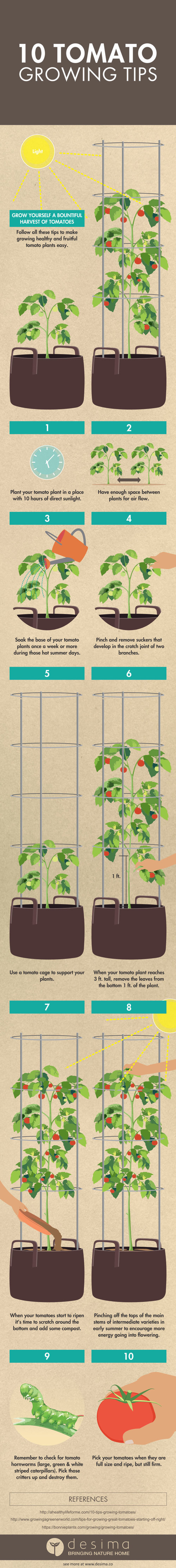 This Is One Tomato Plant Desima Prune Tomatoes Diagram Of An Error Occurred