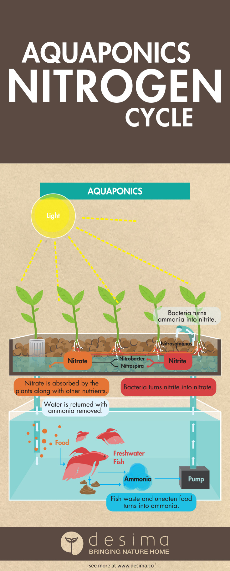 Illustration of the Nitrogen cycle in aquaponics