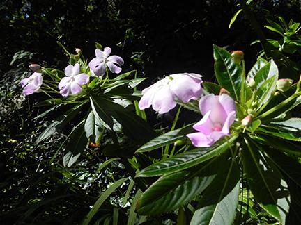 Cross Flora5.jpg