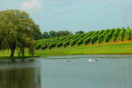 Keswick Vineyards Pond