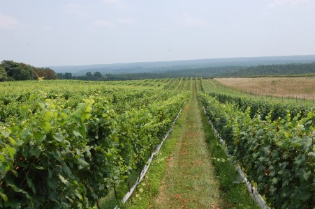 Virginia Wine Tours, Virginia Wine Tasting, Blenheim Vineyards Tasting
