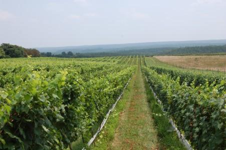 Virginia Wine Tours, Virginia Wine Tasting, Blenheim Vineyards Tasting