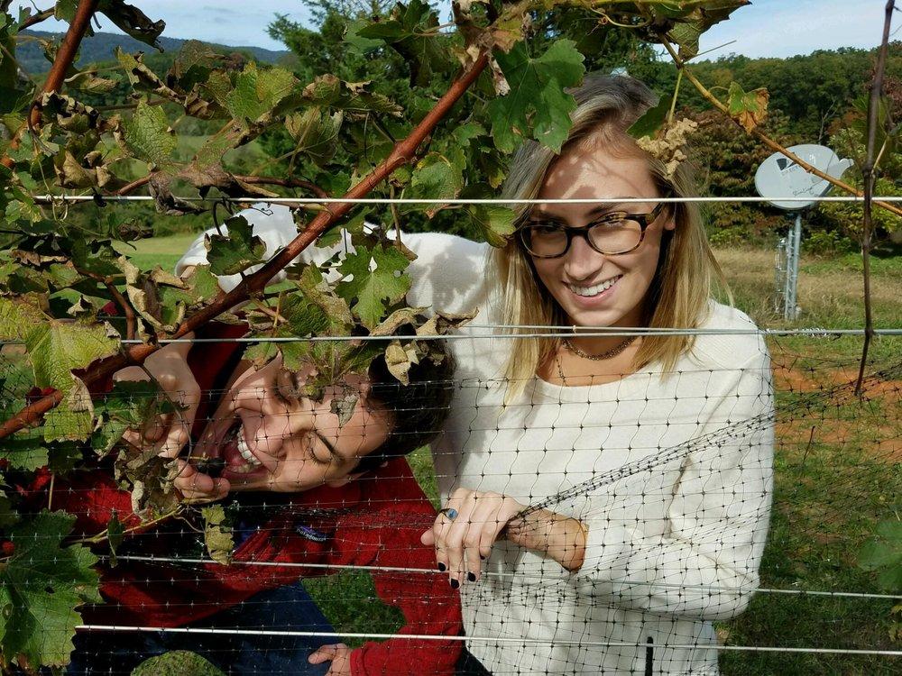 Charlottesville wine tour.jpg