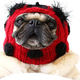 Ladybug Dog Hat from All You Need is Pug on Etsy
