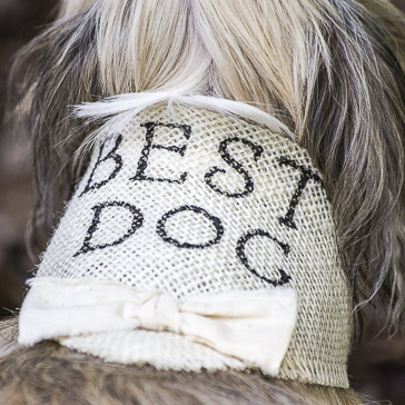 Best Dog Wedding Photography from Daily Dog Tag
