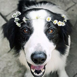 Dog Wearing Dainty Yellow Daisy Flower Crown by cats_an_cats on Instagram