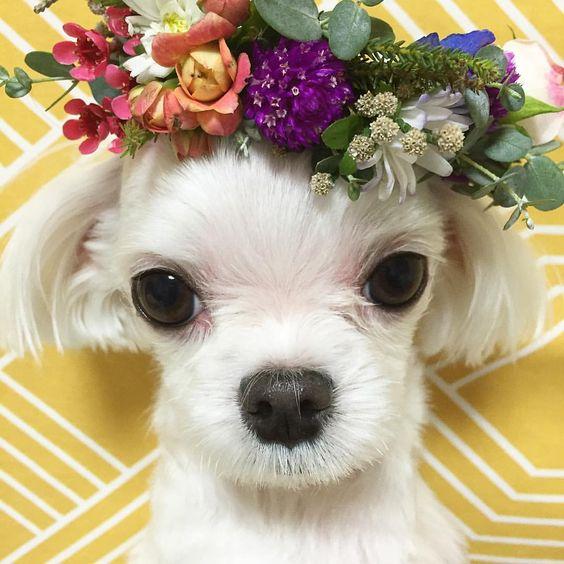 Instadog wearing flower crown