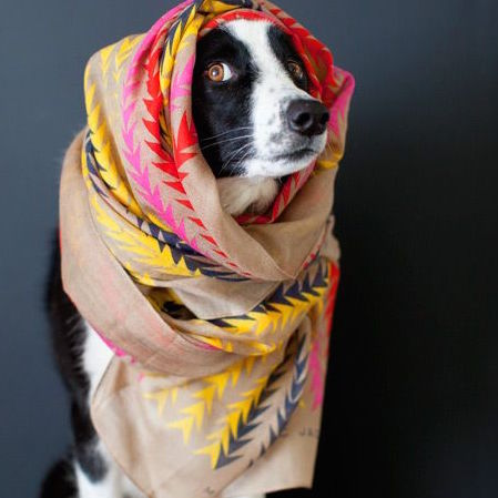 Border Collie wearing Marc Jacobs scarf