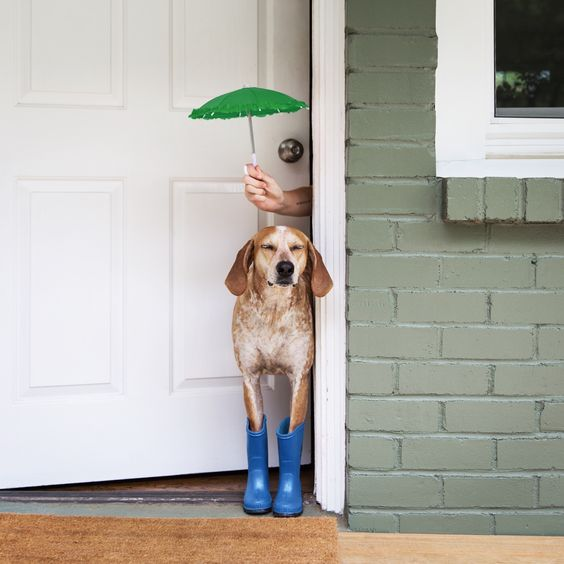 Maddie the Coonhound Under Green Umbrella