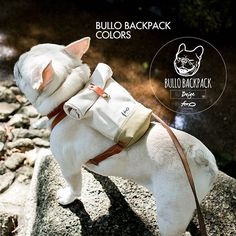 Bullo Backpack for Dogs