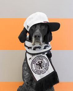 Pointer Dog Wearing Hat & Scarf