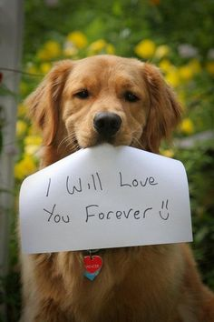 Golden Retriever With Sign