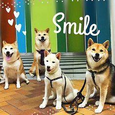 Shiba - Smile Typography