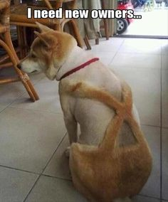 Leiderhosen Dog