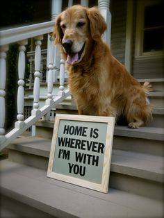 Home is Wherever I'm With You - Golden Retriever