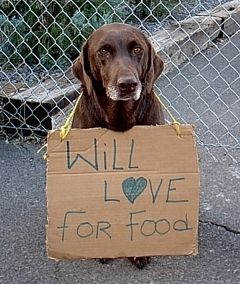 Will Love For Food - Chocolate Lab Wearing Sign