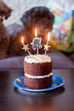 Birthday Carrot Cake for Dogs