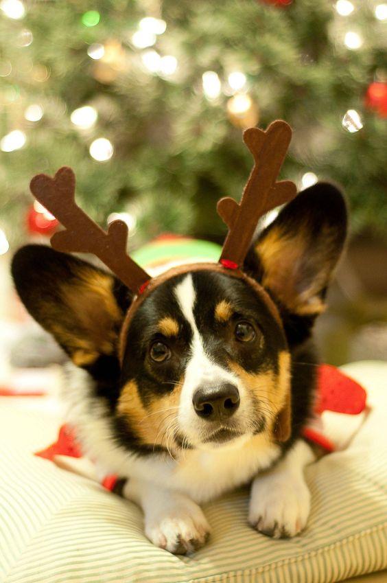Is Santa Here Yet? - Imgur