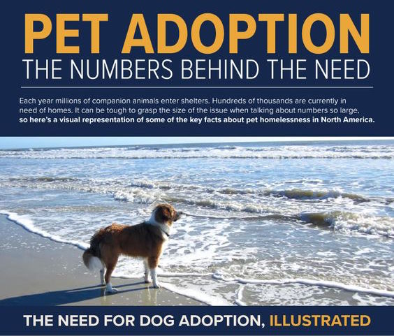 Pet Adoption: The Numbers Behind the Need Infographic