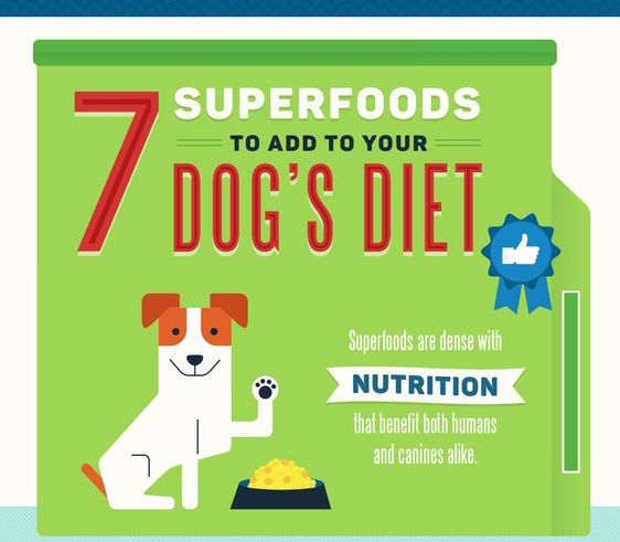 7 Superfoods to Add to Your Dog's Diet Infographic
