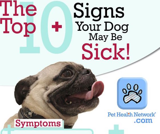 The Top 10 Signs Your Dog May Be Sick Infographic