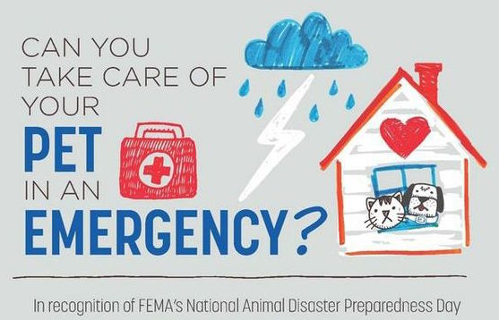 Can You Take Care of Your Pet In An Emergency? Infographic
