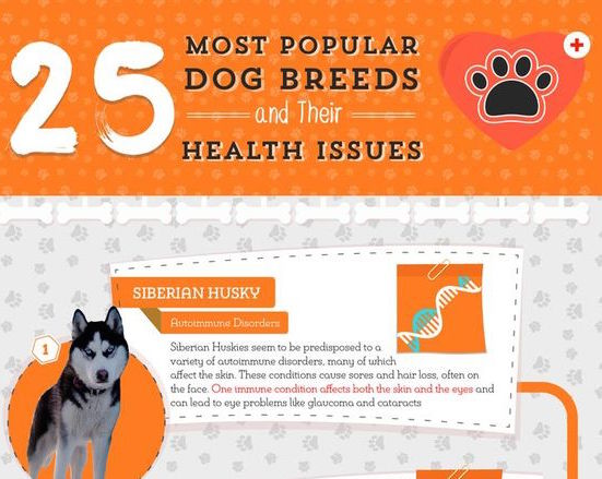 25 Most Popular Breeds & Their Health Issues Infographic