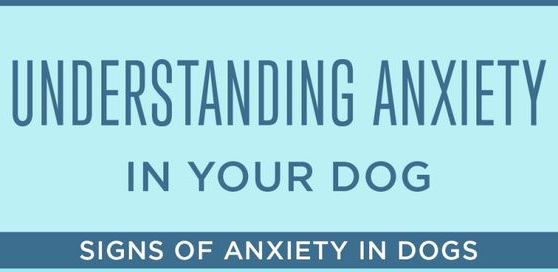 Understanding Anxiety in Your Dog - Signs of Anxiety in Dogs Infographic