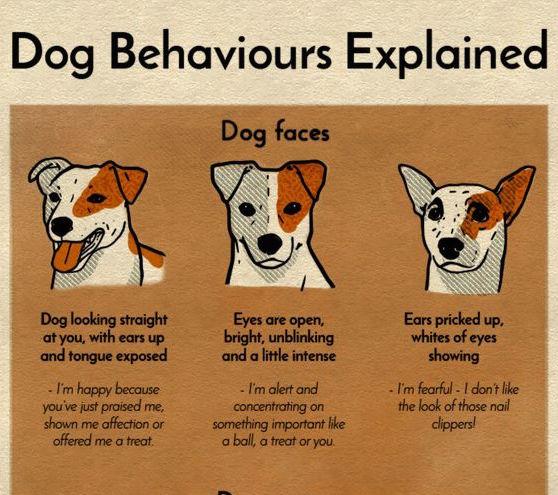 Dog Behaviours Explained