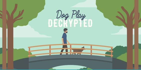 Dog Play Decrypted Infographic