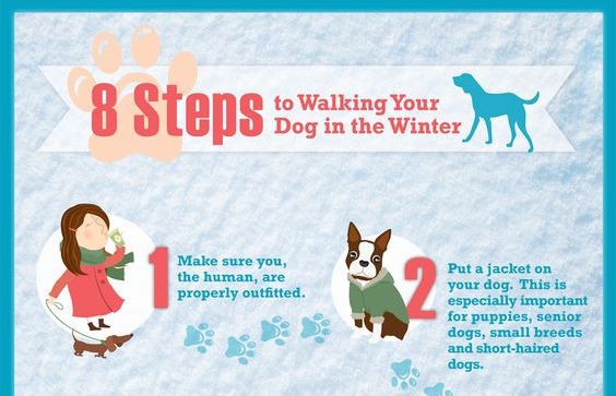 8 Steps to Walking Your Dog in Winter
